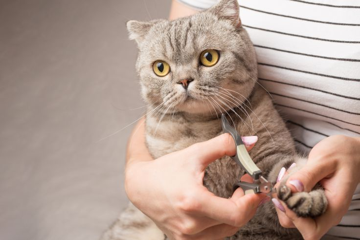 safe nail trims and grooming at Meadows Cat Hospital
