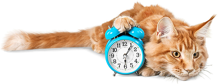 Schedule your cat veterinary appointment now!